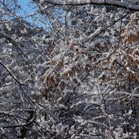 Вязь Зимы .... :: Алёна Савина