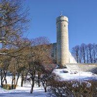 Замок Тоомпеа и башня Длинный Герман :: Андрей K.