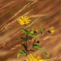 Осенний цветок :: Светлана Карнаух