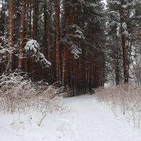 Мартовский снег ... :: Татьяна Котельникова