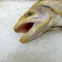 *..как рыба об лёд..* :: Марина Буренкова