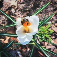 Весна. Во саду ли, в огороде… :: Игорь Чичиль