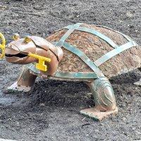 Черепаха Тортила :: Сергей Половников