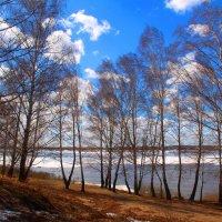 Сибирская весна :: владимир тимошенко