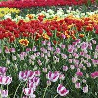За что мы любим весну :: Nikolay Monahov