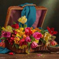 Тюльпаны в чемоданчике :: Светлана Л.