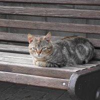 Кошки в марте :: Маргарита Батырева