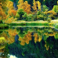 Осень у воды. :: nadyasilyuk Вознюк