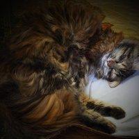 Не верьте,я не сплю 1 апреля... :: Мила Раменская (Забота)
