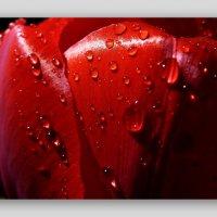 цвет любви :: Heinz Thorns