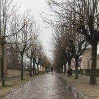 Новогодняя прогулка :: Андрей Симонов