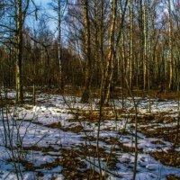 Весенний лес :: Виктор Корочкин
