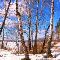 Безнадежное дело зимы :: владимир тимошенко
