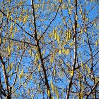 Весна! :: Tanja Gerster