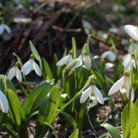 Песня Весны :: Паровозик из Ромашково Ж