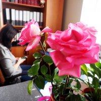 Розы. :: Ильсияр Шакирова
