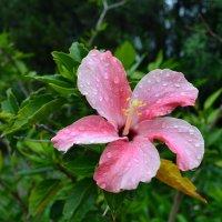 Под дождём :: Ольга