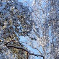 Зима на бис, последний реверанс :: Марина Морозова