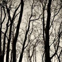 Сказочный лес готической сказки :: Сергей Землянский