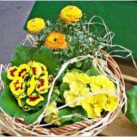 Весенние цветы. :: Валерия Комова