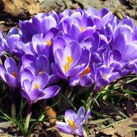 Весна, однако ! :: Владимир однакО...