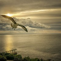 Душа — она как птица, ей в клетке не сидится... :: Александр Бойко