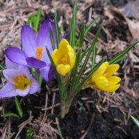 Краски весны. :: ТАТЬЯНА (tatik)