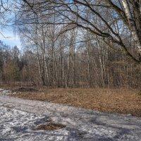 В апрельском лесу... :: Владимир Жданов