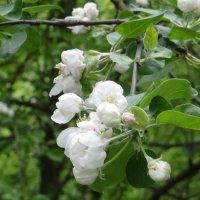 опять весна, опять цветы, и это счастье на земле :: Sabina