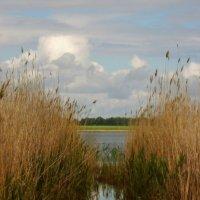 озеро :: ольга хакимова