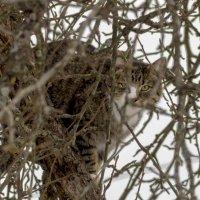 гнездование кота :: оксана