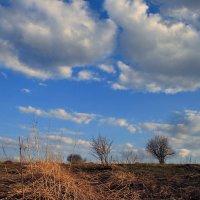 Я слышу пробуждение листвы, среди остатков зимней непогоды... :: Евгений Юрков