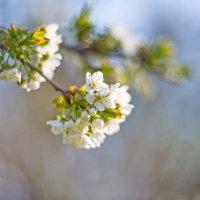 Весна :: SWT93 rus