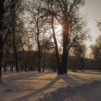 зимний парк :: Татьяна Белоус