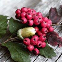 Осенний букет :: Катерина Пестовская