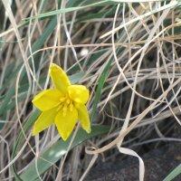 первые цветы мая :: Ольга Иргит
