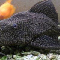 Рыбка :: Николай П.