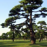 Парк перед дворцом императора. Токио :: Валерий Струк
