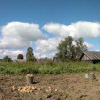 Уборка картофеля :: Павел Михалев