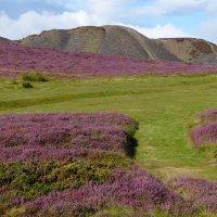 Вересковые пустоши в горах Шотландии. :: Ольга