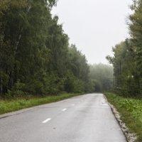 Дорога уходит в туман :: Екатерина Рябинина