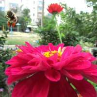 пчёлка с нектаром :: Marina Timoveewa