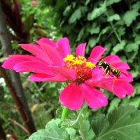 осе тоже цветочек по нраву :: Marina Timoveewa