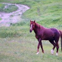 Конь на склоне :: Олег ХРОНОС