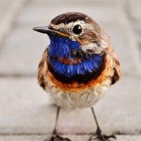 Птичка :: Евгений Гресь