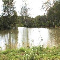 Старый пруд :: Наталья Золотых-Сибирская
