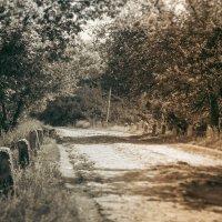 Заброшенная дорога :: Денис Ведь