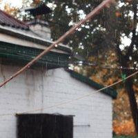 Осенний дождь :: St. Rezkiy