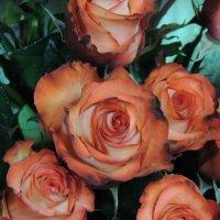 розы :: Соня Середенко