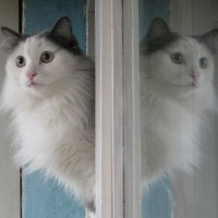 Сибирские близнецы :: Сергей W.Протопопов